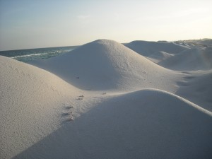 Dunes at Fort Pickens Beach. Photo R Anderson