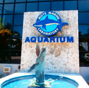 Mote Marine Laboratory Aquarium in Sarasota, FL. is well worth visiting. Photo R. Anderson