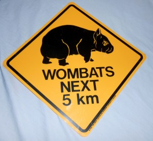Australia is a great place to see wombats but is not not the best place to host regular season baseball games in the middle of Spring Training. Photo R. Anderson