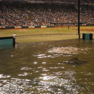 Although the stingray tank at Tropicana Field remains the Tampa Bay Rays showed that the devil is in the details when they switched from being  called the Devil Rays to just the Rays after 10 losing seasons. The result of the name change was a trip to the World Series in 2008. Photo R. Anderson